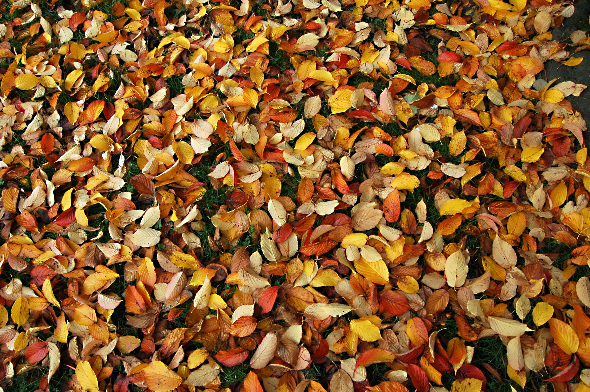 Your autumn and winter gardening to-do list